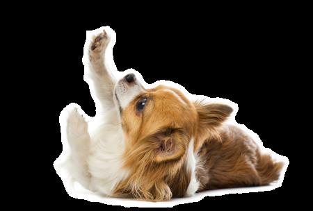 Dog-pawUp2
